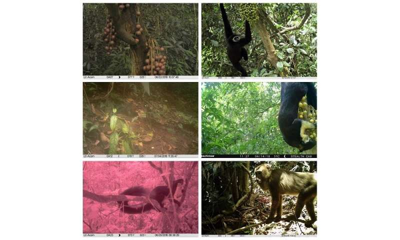 Differences in Frugivores Affect Consumption of Fruits and Seed Dispersal in Tropical Forests