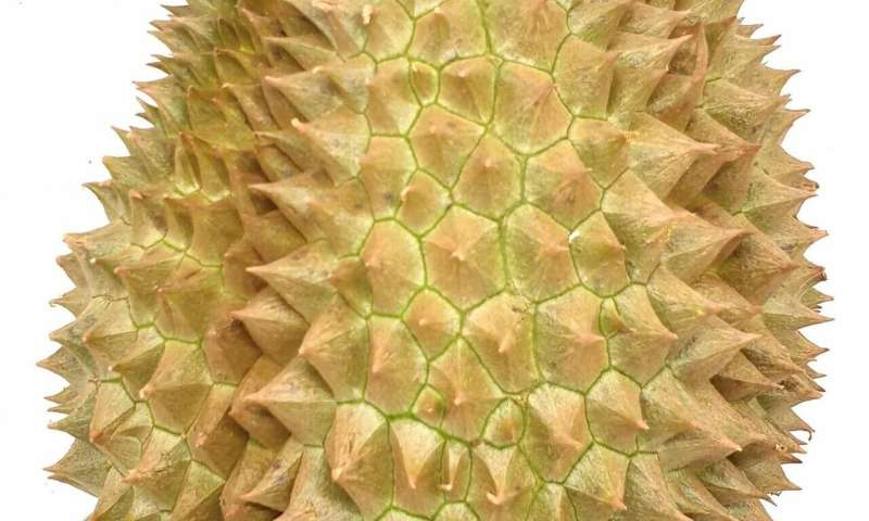 Discovering what makes durian stink