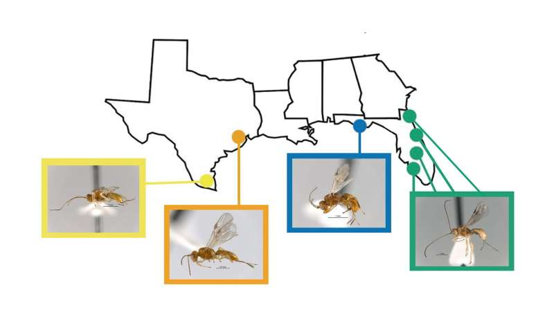 Discovery adds new species to Rice lab's ghoulish insect menagerie
