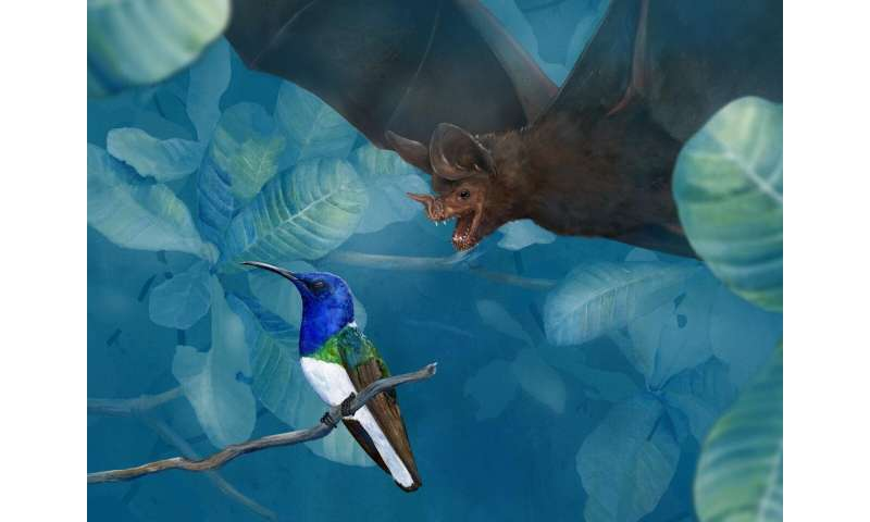 DNA in fringe-lipped bat poop reveals unexpected eating habits