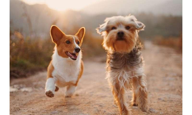 [Image: dog.jpg]