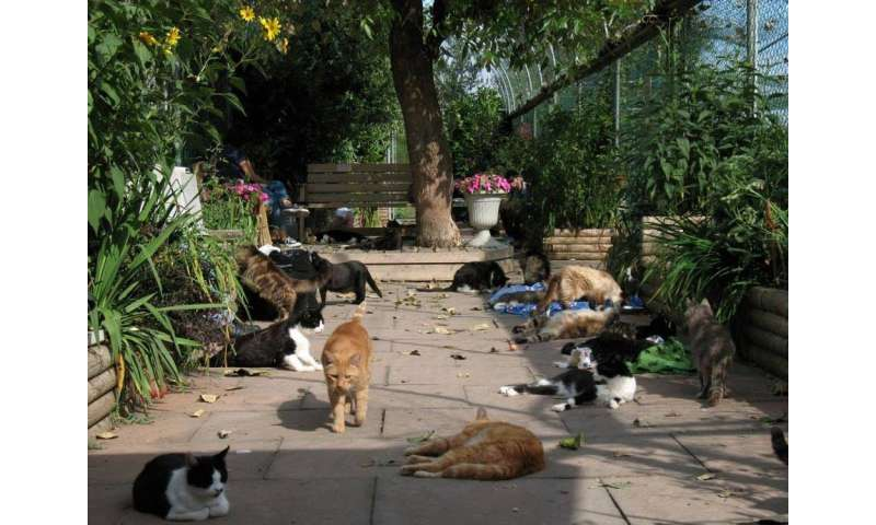 Don't blame cats for destroying wildlife – shaky logic is leading to moral panic