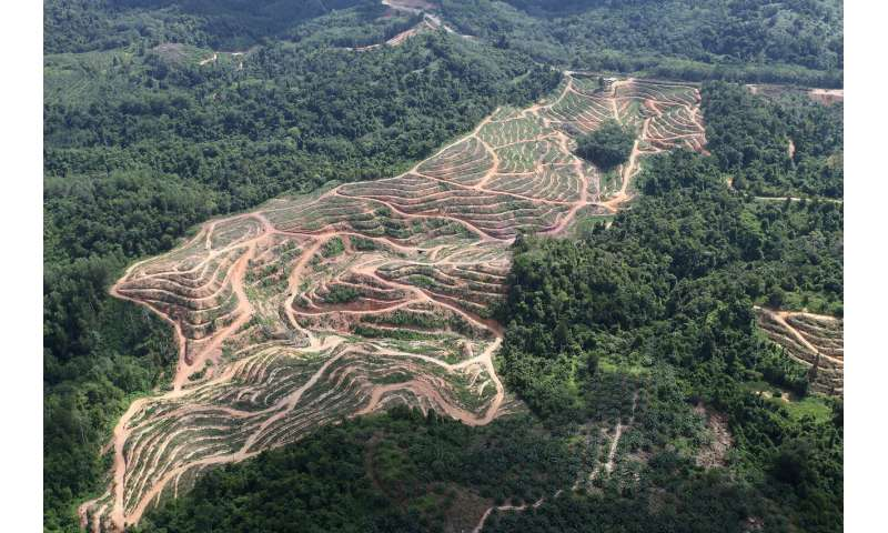 Don't blame U.S. biofuels for Indonesia and Malaysia deforestation, study shows