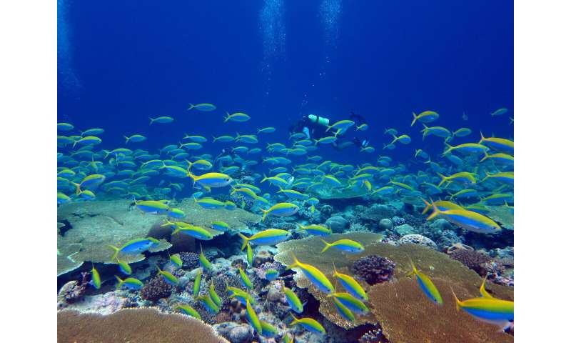 Earth's most biodiverse ecosystems face a perfect storm