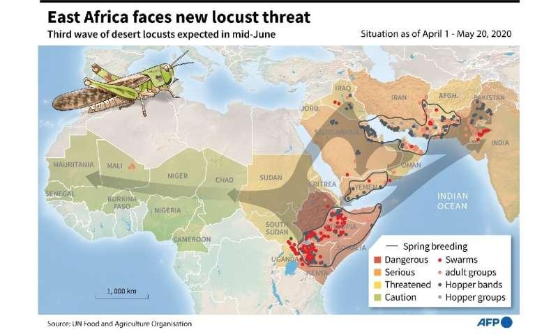 África Oriental enfrenta nueva amenaza de langosta