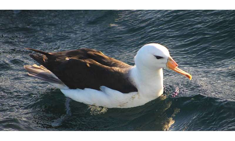 Endangered seabirds caught by fishermen are being Intentionally killed or mutilated