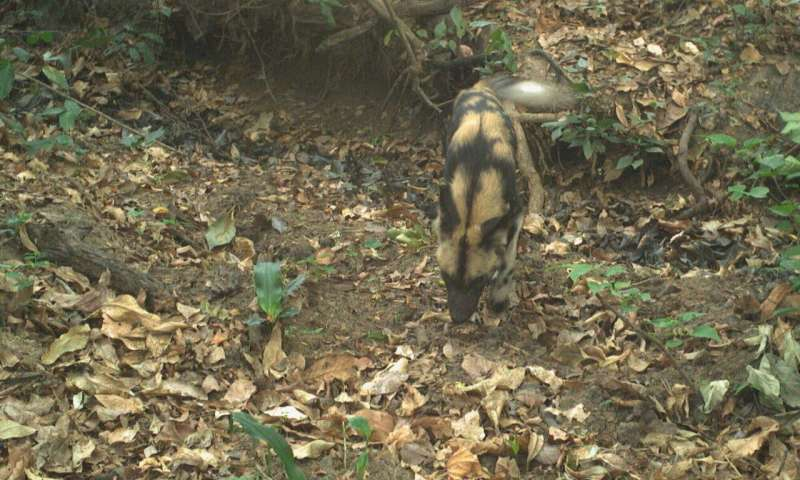 Endangered wild dogs snapped in South Sudan