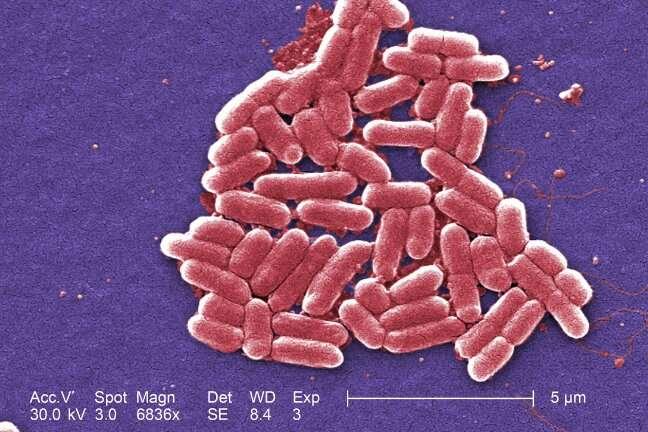 Engenharia de seleção natural em micróbios tem implicações na produção de biocombustíveis, abordando a resistência a antibióticos