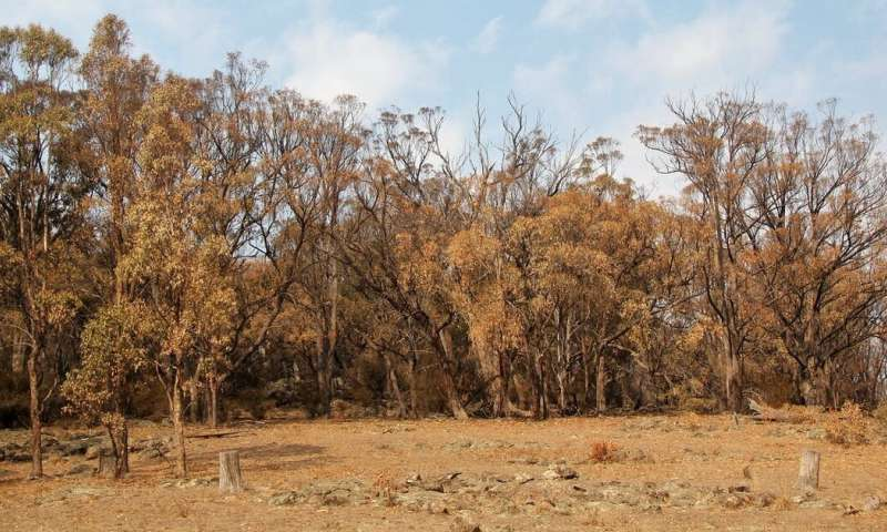 Entire hillsides of trees turned brown this summer. Is it the start of ecosystem collapse?