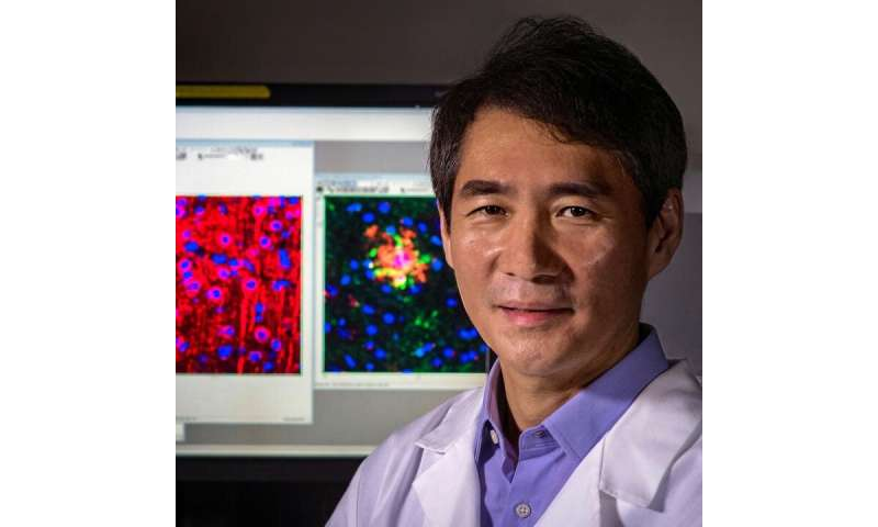 Enzyme SSH1 impairs disposal of accumulating cellular garbage, leading to brain cell death