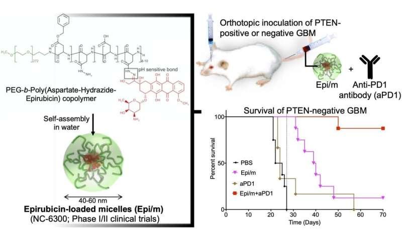 Epirubicin-loaded nanomedicines beat immune checkpoint blockade resistance in glioblastoma