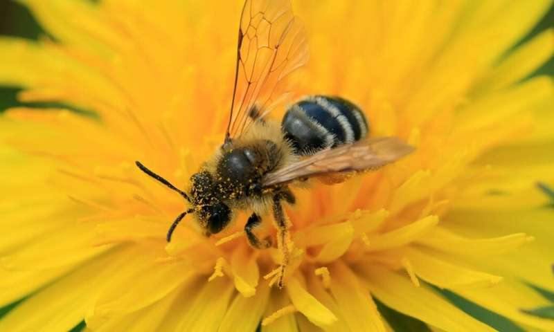 Europe has banned neonicotinoid insecticides. Action is needed in Africa, too