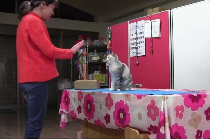 Evidence of a cat recognizing and then mimicking human behavior observed