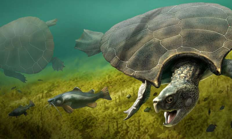 Extinct giant turtle had horned shell of up to three meters