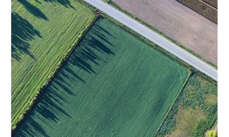 """研究人员开发一种新型""""分子加热器"""",可提高全球农作物产量"""