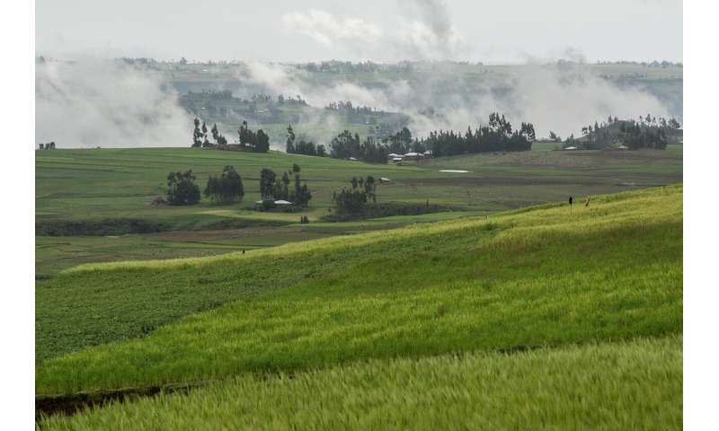 Farmer knowledge is key to finding more resilient crops in climate crisis