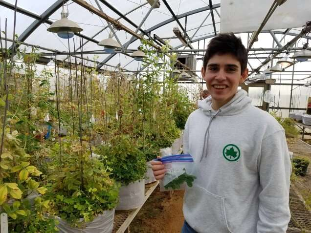 Fast, accurate way to check peanut plants for healthy traits