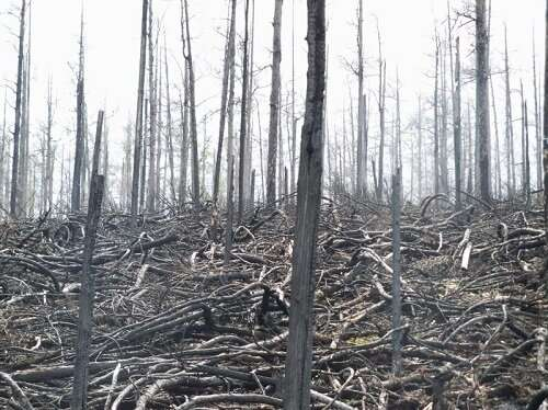 Fire aerosols decrease global terrestrial ecosystem productivity through changing climate