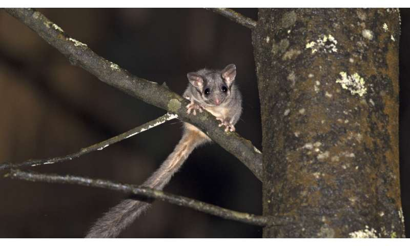 Fire and logging reduce homes for threatened mammals