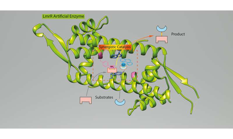 First artificial enzyme created with two non-biological groups
