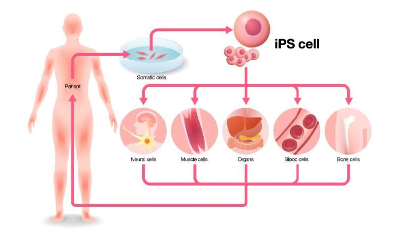 First supercentenarian-derived stem cells created