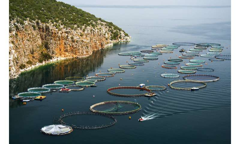 Fish farmers seek new weapons to fight thriving parasites