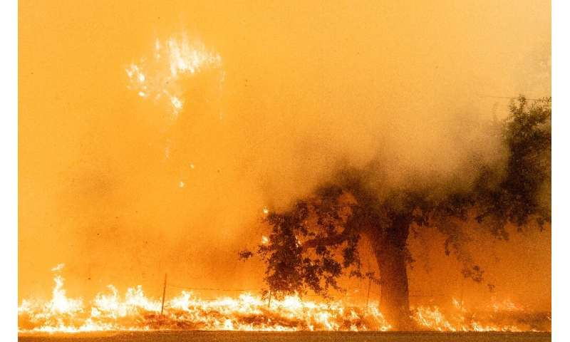 Flames and smoke overtake a tree as the LNU Lightning Complex fire continues to spread in Fairfield, California on August 19, 20