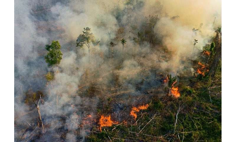 Flames consume a section of the Amazon in the state of Para on August 15, 2020