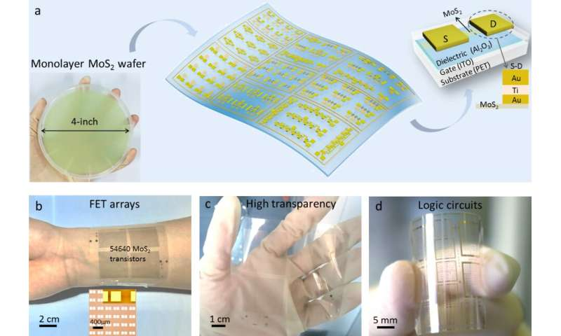Flexible and transparent electronics fabricated using a two-dimensional semiconductor