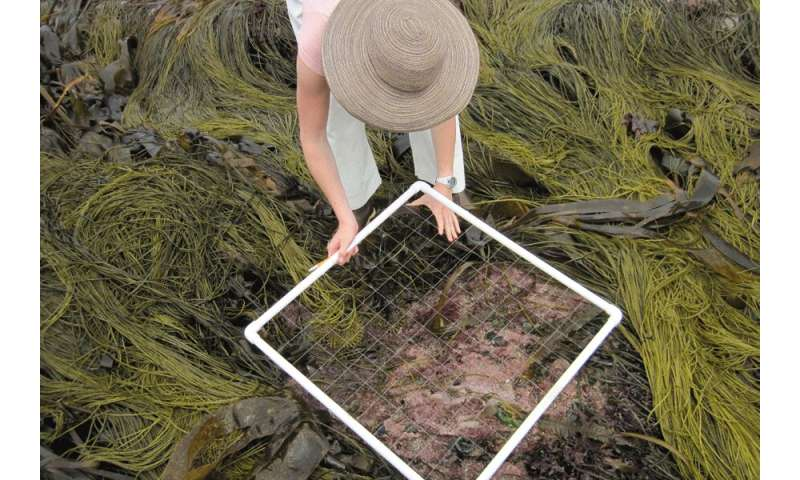 Florida State-led team offers new rules for algae species classification