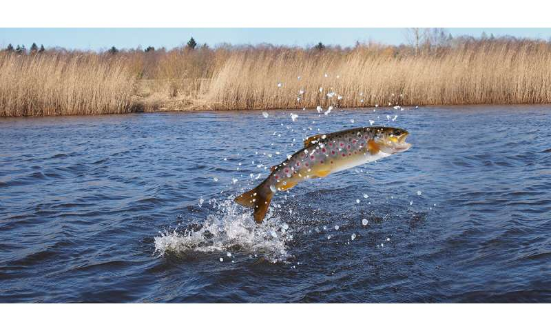 Following sea trout minute by minute