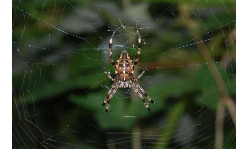 Following the insect meltdown, numbers of orb web spiders have drastically declined