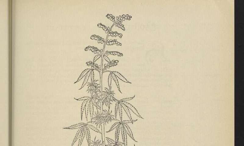 Forbidden herbs? The effects of cannabis were a controversial topic 250 years ago