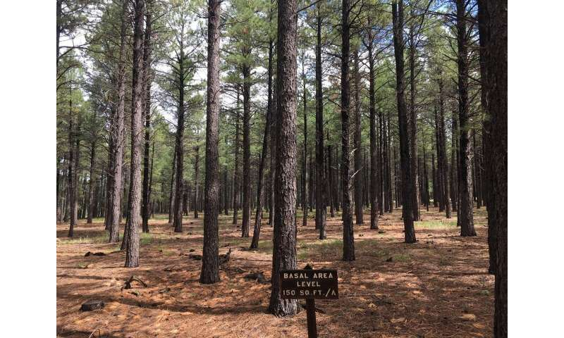 Forest growth in drier climates will be impacted by reduced snowpack, PSU study finds