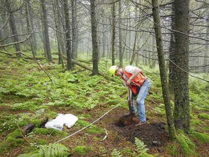 Forest soils recovering from effects of acid rain