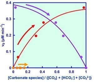 Formate dehydrogenase reduces carbon dioxide to formic acid