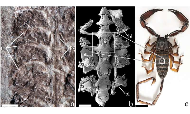 Fossil is the oldest-known scorpion
