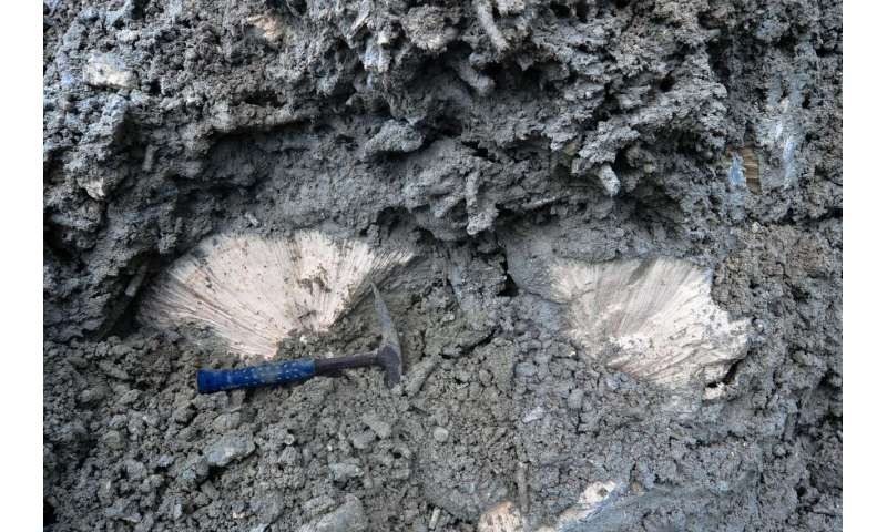Fossils help identify a lone 'bright spot' in a similar state to coral reefs before human impact