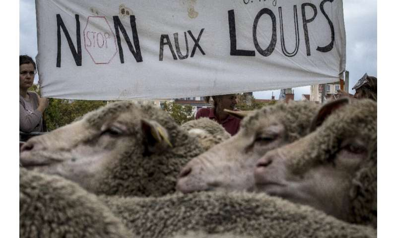 """French breeders hold a banner reading """"no to wolves"""" as they demonstrate with their animals in Lyon"""