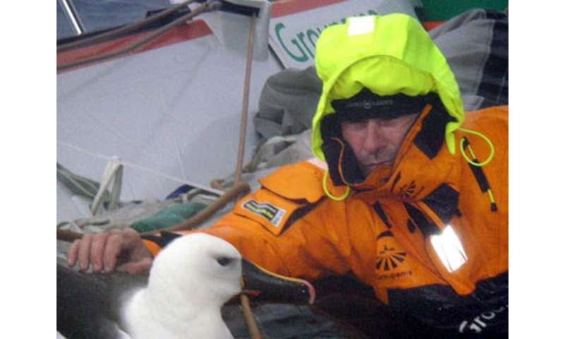 """French sailor Franck Profitt strokes an albatross which landed for a few minutes on the maxi-trimaran """"Groupama 3"""""""