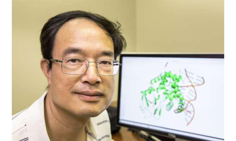 FSU study aids fight against HIV, hepatitis B