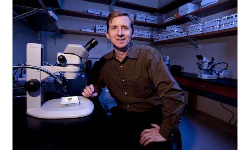 FSU study underscores importance of molecular highways for organ health