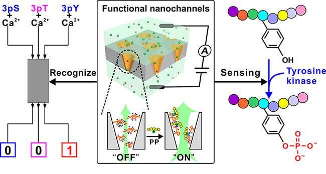 Functional ion nanochannel-based approach to detect tyrosine phosphorylation