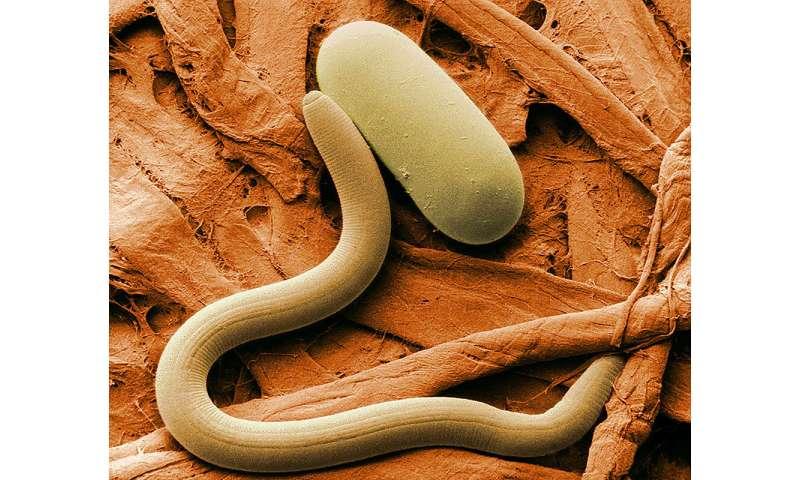 La aplicación de hongos frustra la principal plaga de la soja, encuentra un estudio