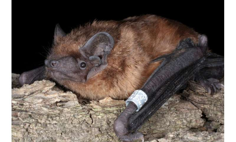 Generational shifts help migratory bats keep pace with global warming