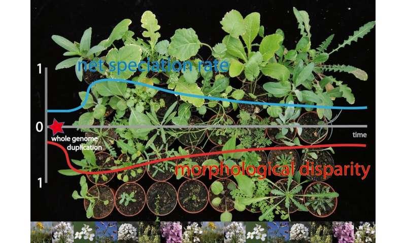 Duplicaciones del genoma como estrategia de adaptación evolutiva