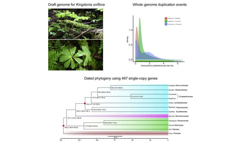 Genome sequencing reveals potential endangered mechanisms of China-endemic Kingdonia