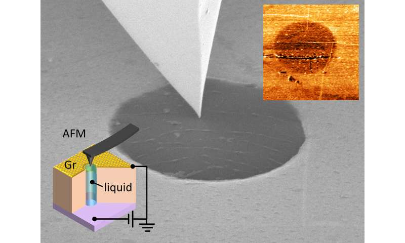 Getting a closer look at living cells and batteries: a little bit of graphene goes a long way