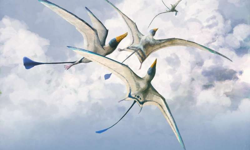 Giant lizards learnt to fly over millions of years