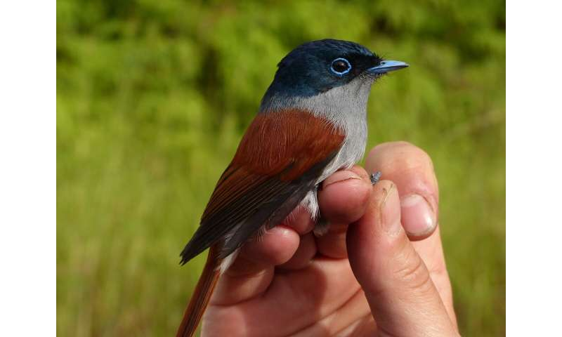 Global relationships that determine bird diversity on islands uncovered